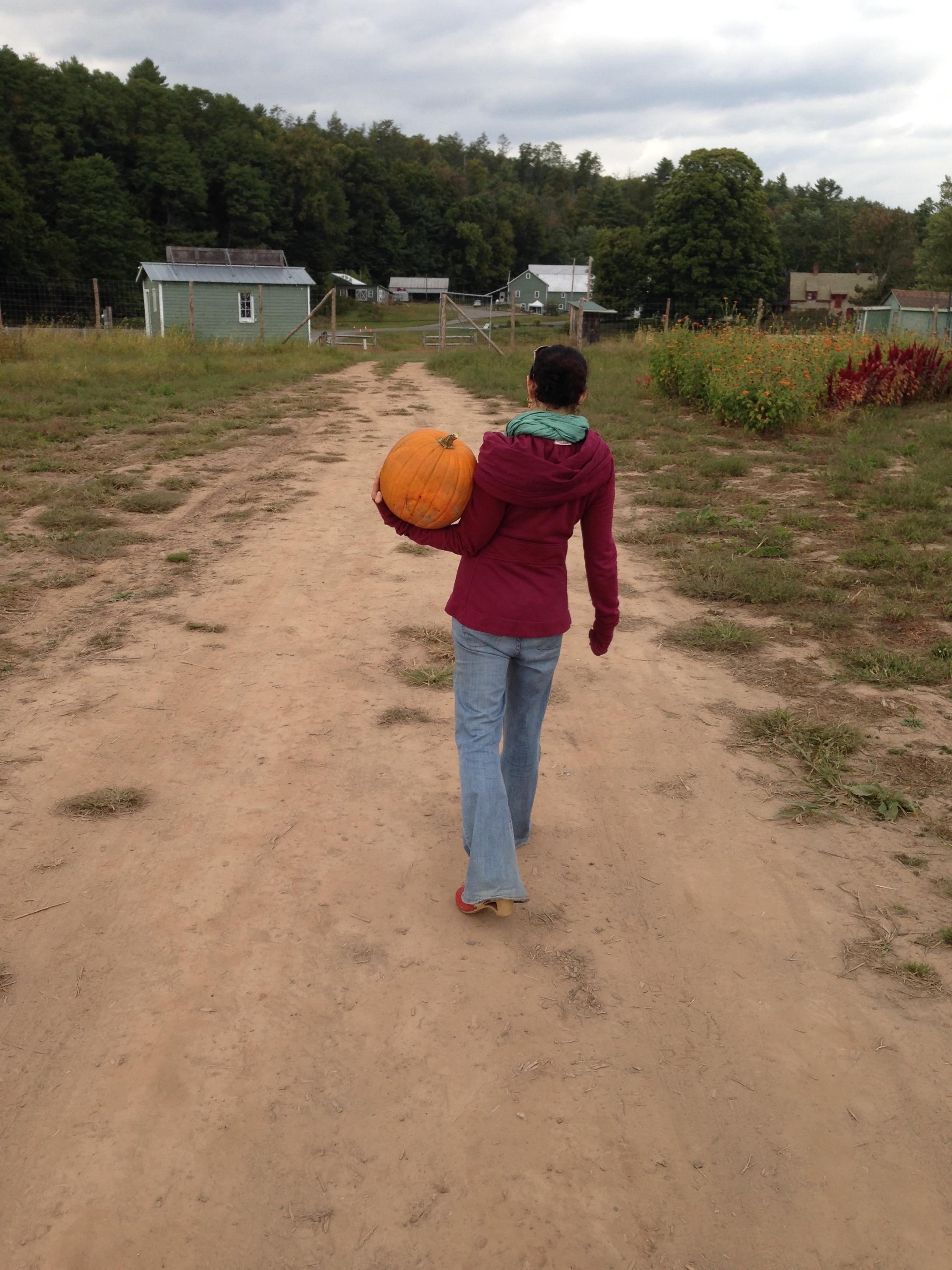 pumpkin picking 1